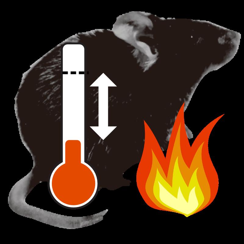 Body temperature homeostasis in mammals